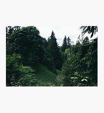 Lush Forest of Washington Park Photographic Print