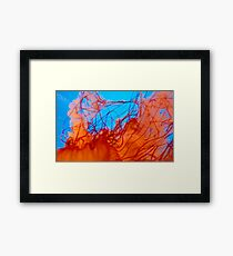 Jelly Fish Series no.1 Framed Print