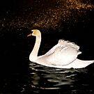Swan Song by Barbara  Brown