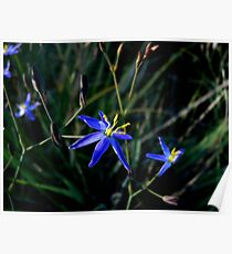 Tufted Blue Lily Poster