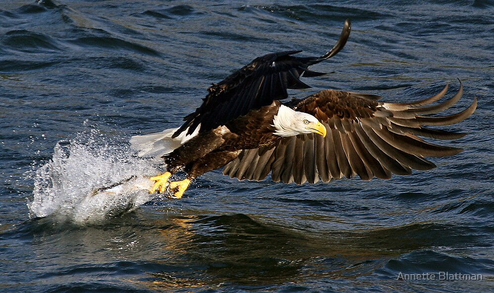 Catch of the day by Annette Blattman