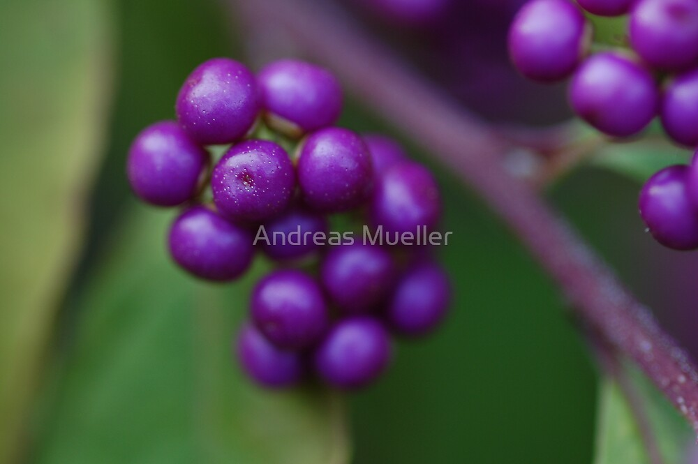 Purple by Andreas Mueller