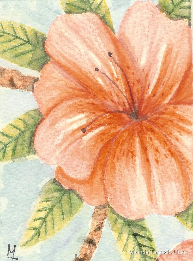 Coral Hibiscus Watercolor 418 by Melinda Tarascio Lidke