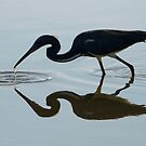 Silhouette, Tri Colored Heron by SuddenJim