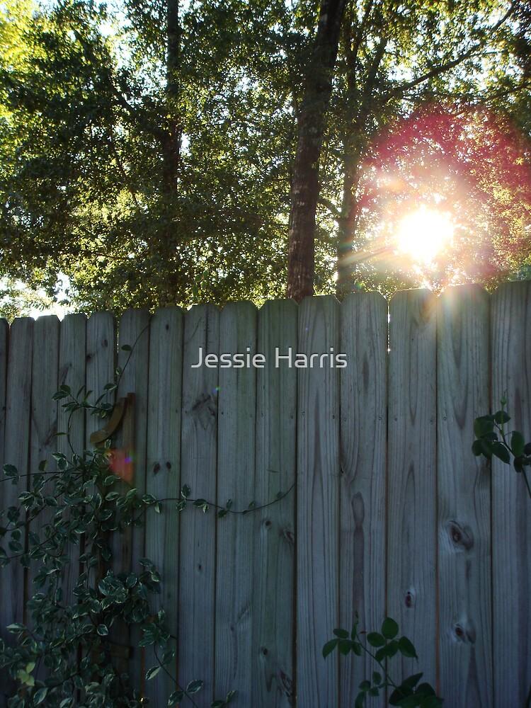Secret Garden by Jessie Harris