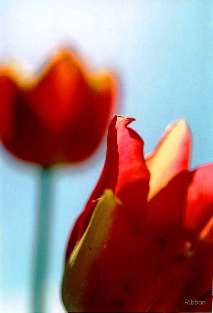 Tulips by Ribbon