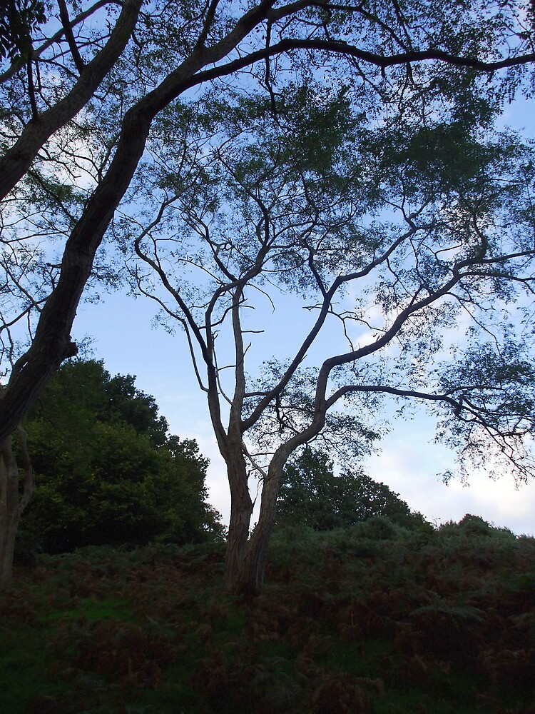 Nice Tree At Dusk by Roger Poole