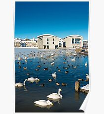 Town hall and swans in Reykjavik Iceland Poster