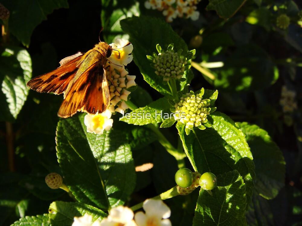 Nectar by Jessie Harris
