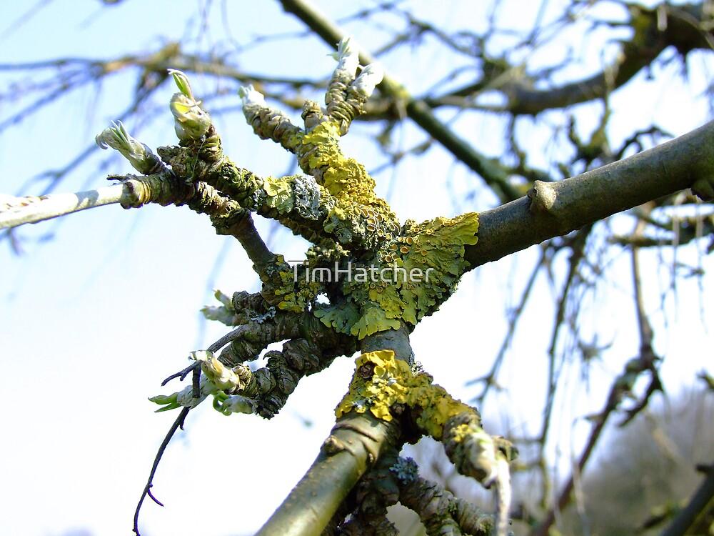 Lichen by TimHatcher