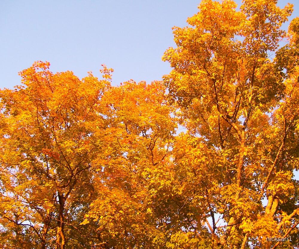 fall by nicksarr1