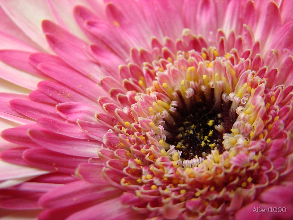 Such a flower by Albert1000