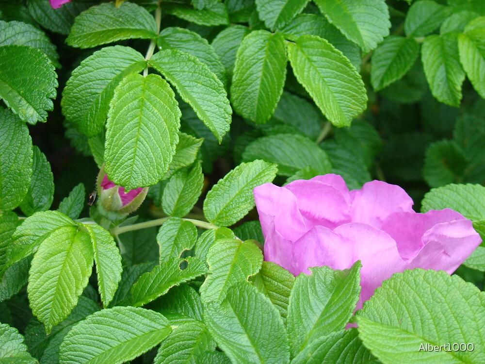 Flower in greenery by Albert1000