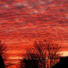 Red Sky and silhouettes. by Livvy Young