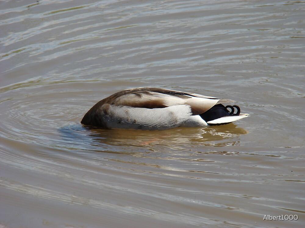 A headless duck by Albert1000