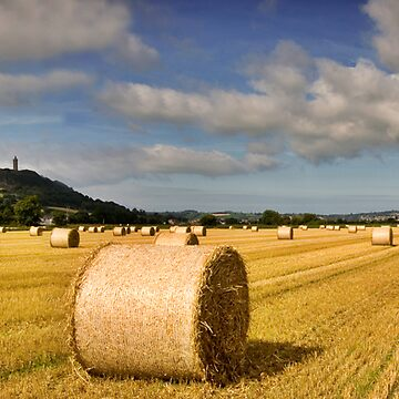 Scrabo Tower Bales Co Down Ireland by webdoctor