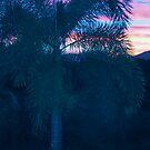 sunset by Shona