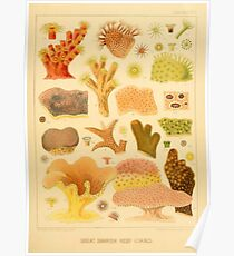 Antique Naturalist Coral  Poster