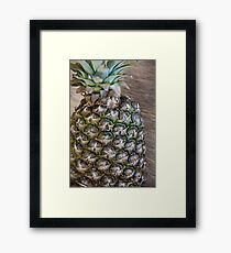 Green sprouts of basil Framed Print