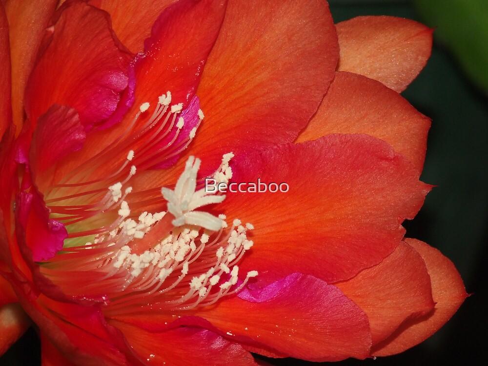 CactusFlower-Macro- by Beccaboo