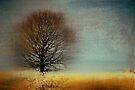 Arbrensens - v03a by Aimelle