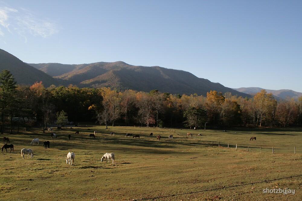 Smoky Mountain Horse Ranch by shotzbyjay