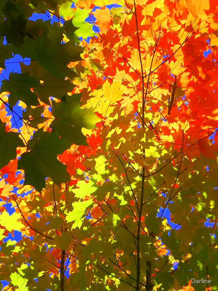 Autumn's Palette by Darline
