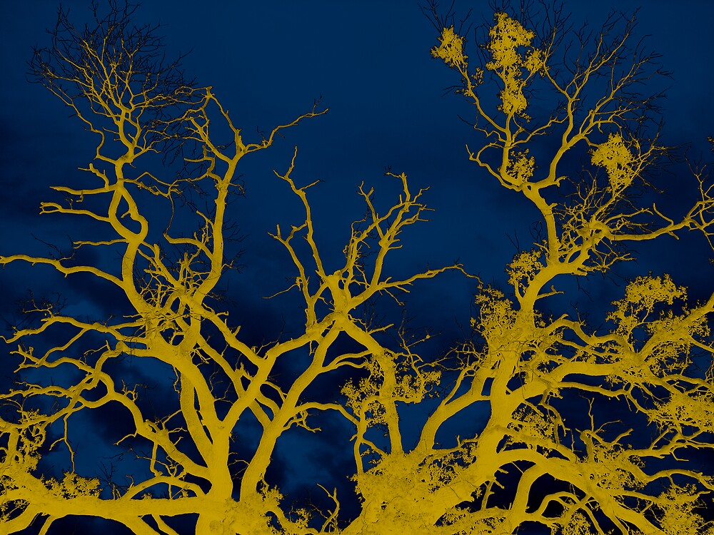 Branches by Jared Thomas