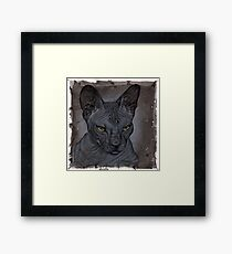 Sphynx Katze Framed Print