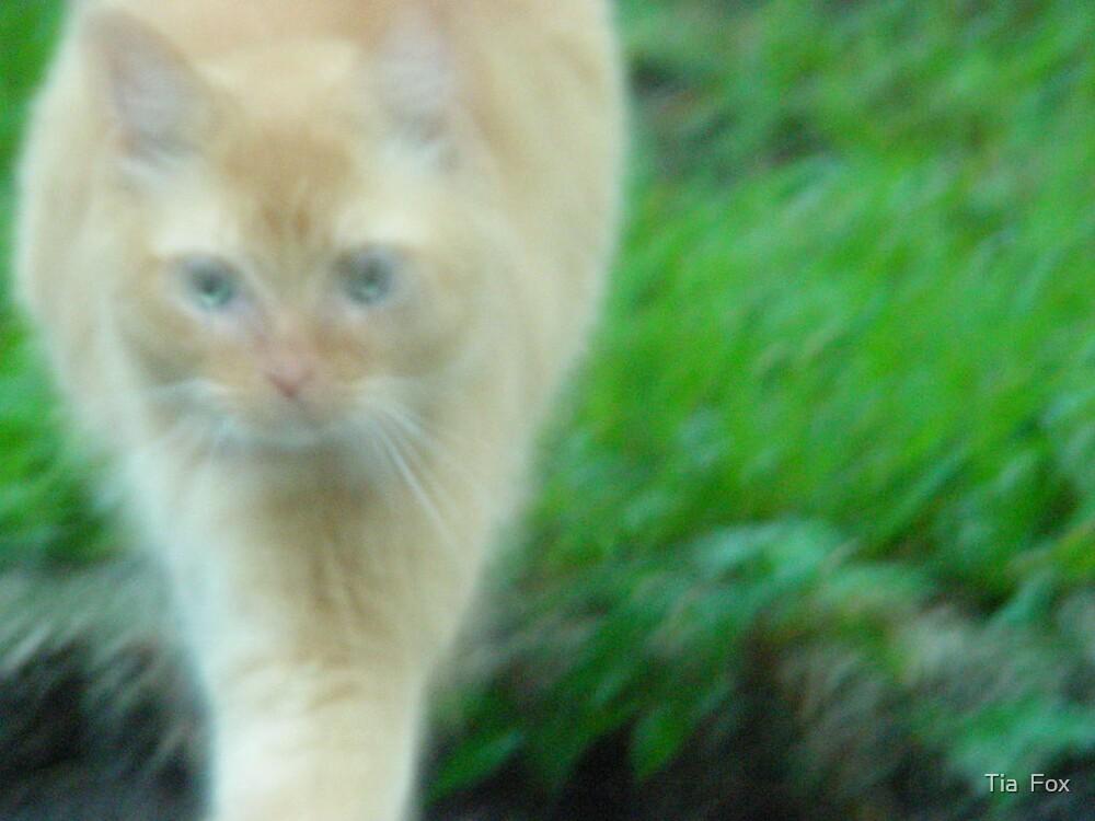 cat full by Tia  Fox