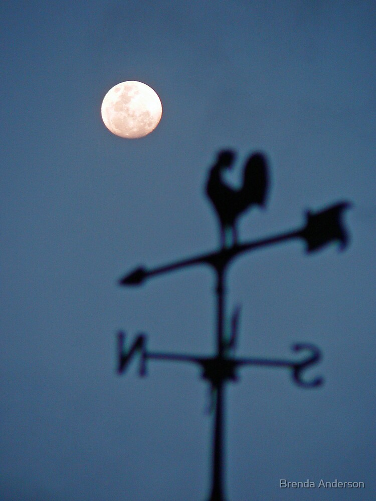 Have you ever seen a rooster crowing at the moon? by Brenda Anderson