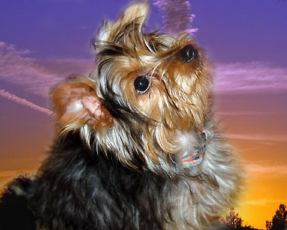 My Hannah puppy. by Stephen Forbes