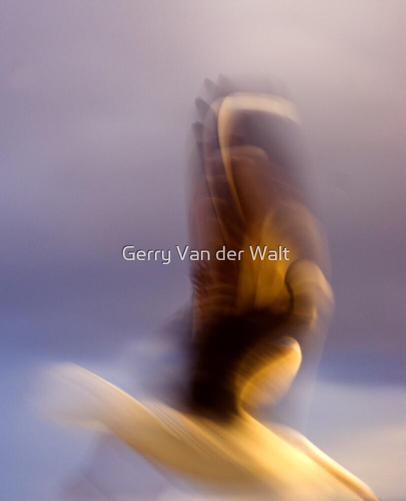Blurred Seagull Flight by Gerry Van der Walt