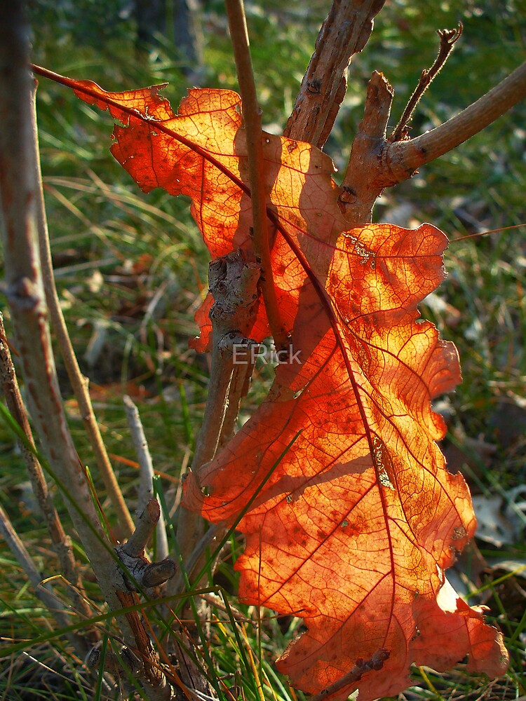 Sun Drenched leaf by ERick