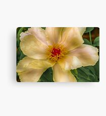 Clematis in HDR Canvas Print