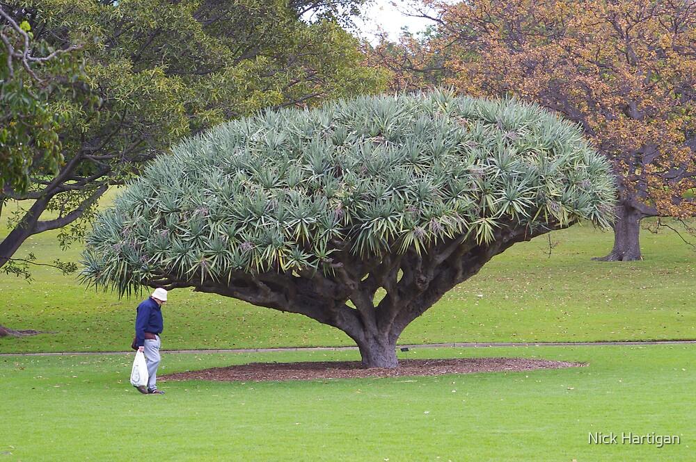 Man & A Tree by Nick Hartigan