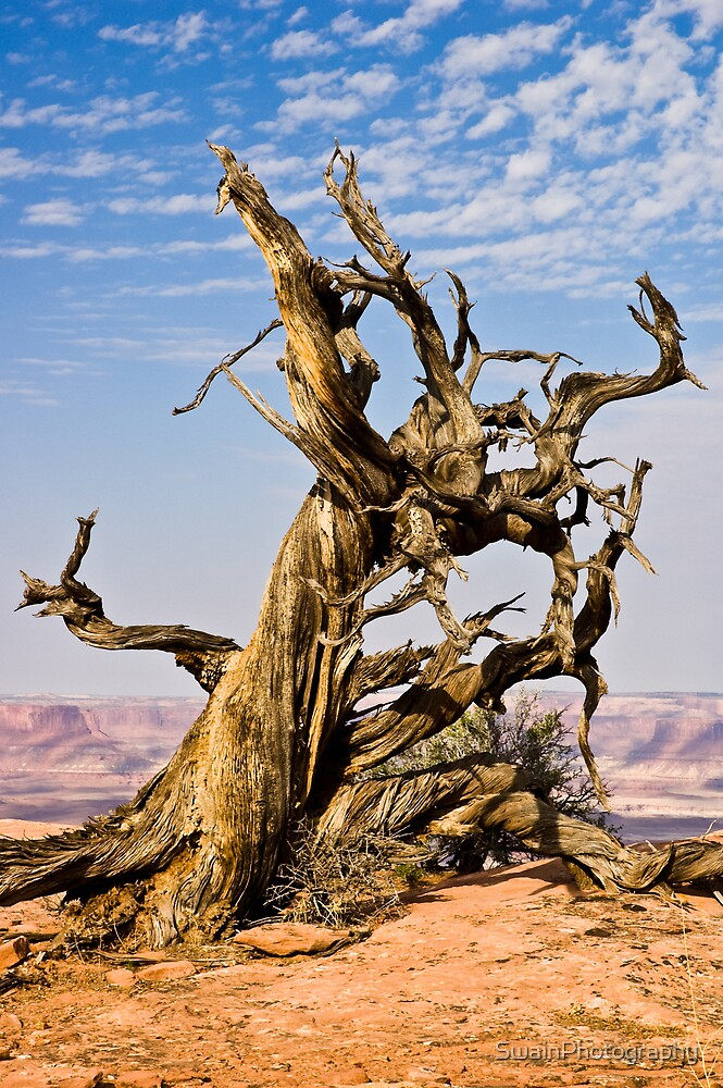 Dead Tree 2 by SwainPhotography