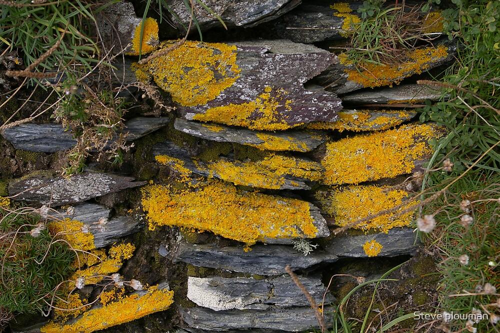 Dry stone wall by Steve plowman
