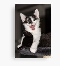 Cute Kitten Sticking Tongue Out Cat Canvas Print