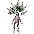 Mandrake  by Brett Manning