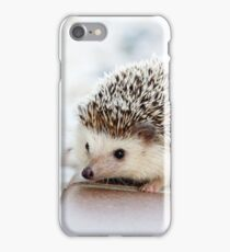 Cute Baby Hedgehog Photograph iPhone Case/Skin