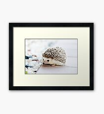 Cute Baby Hedgehog Photograph Framed Print