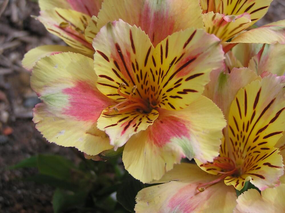 flowers? by bubblewrap