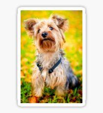 Cute Little Yorkie Yorkshire Terrier Dog Sticker