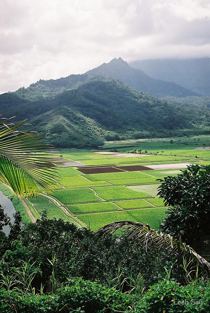 kauai, hawaii by Leah Gay