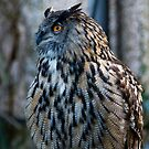 Eagle Owl by M.S. Photography/Art