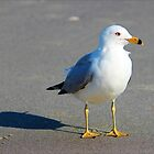 Seagull And His Shadow by Cynthia48