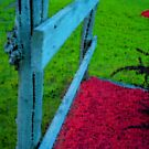 Fence by dinnerwithdonna7