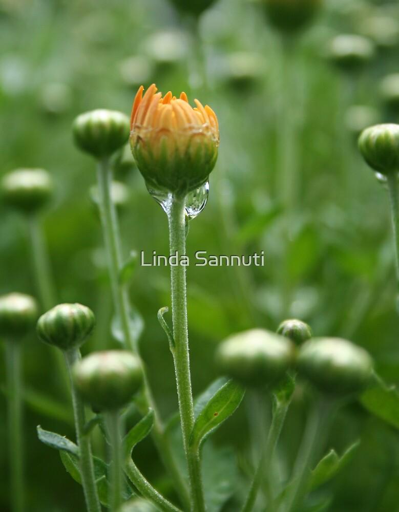 the begining by Linda Sannuti