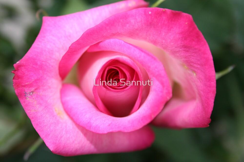 rosey pink by Linda Sannuti